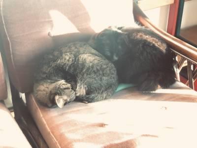 サイトーの人生横すべり「猫には言えない」EP285
