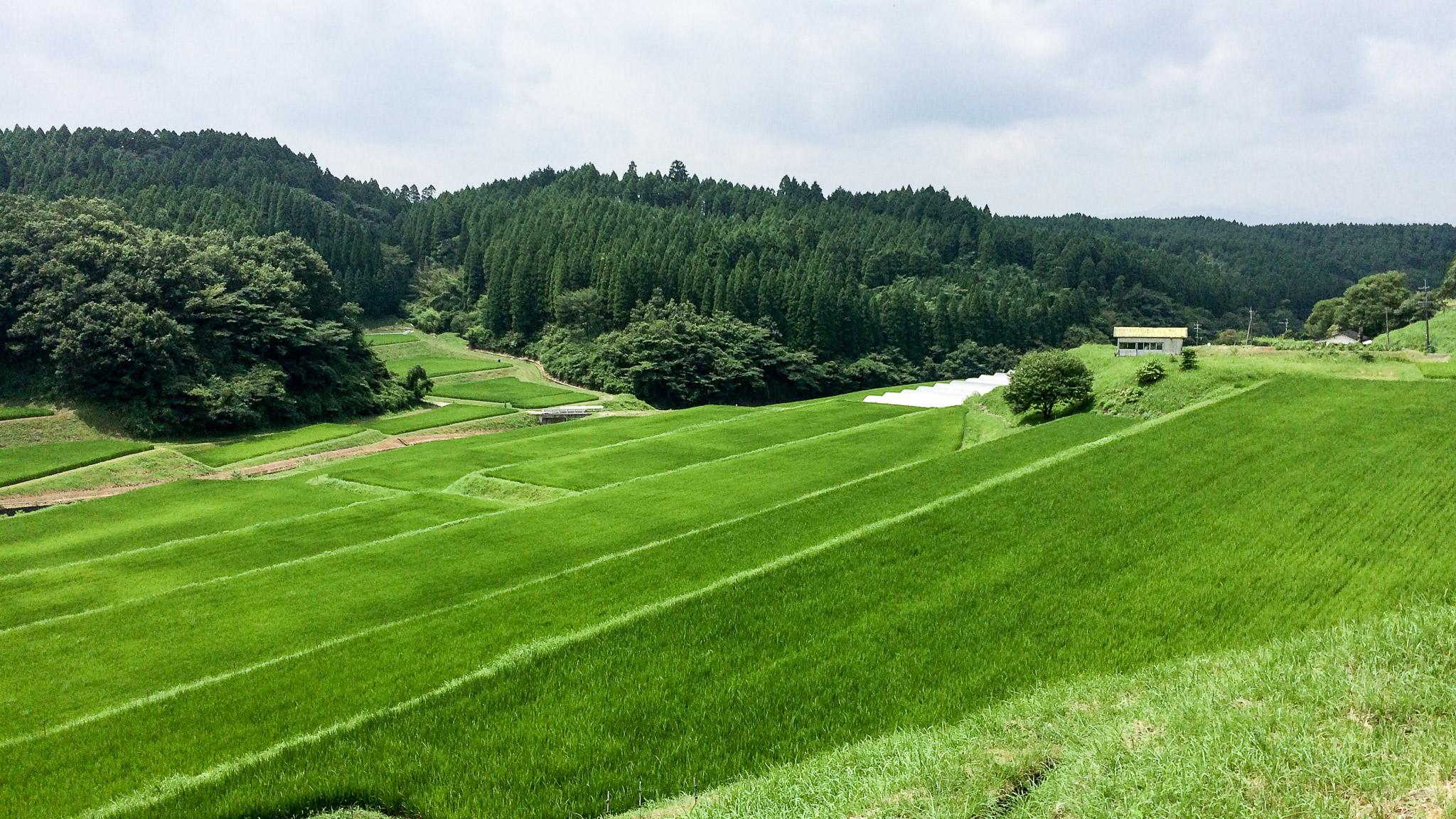小国町岳の湯近くの段々畑